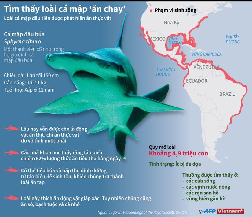 "[Infographics] Tim hieu loai ca map ""an chay"" dau tien tren the gioi hinh anh 1"