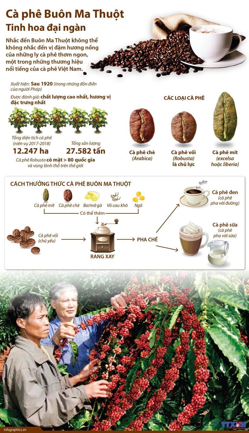 [Infographics] Caphe Buon Ma Thuot - Tinh hoa dai ngan hinh anh 1