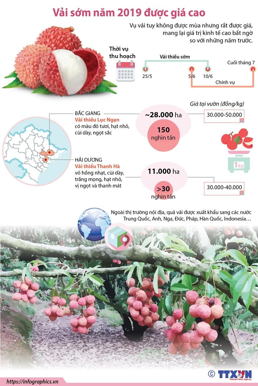 [Infographics] Vai som nam 2019 duoc gia cao bat ngo hinh anh 1