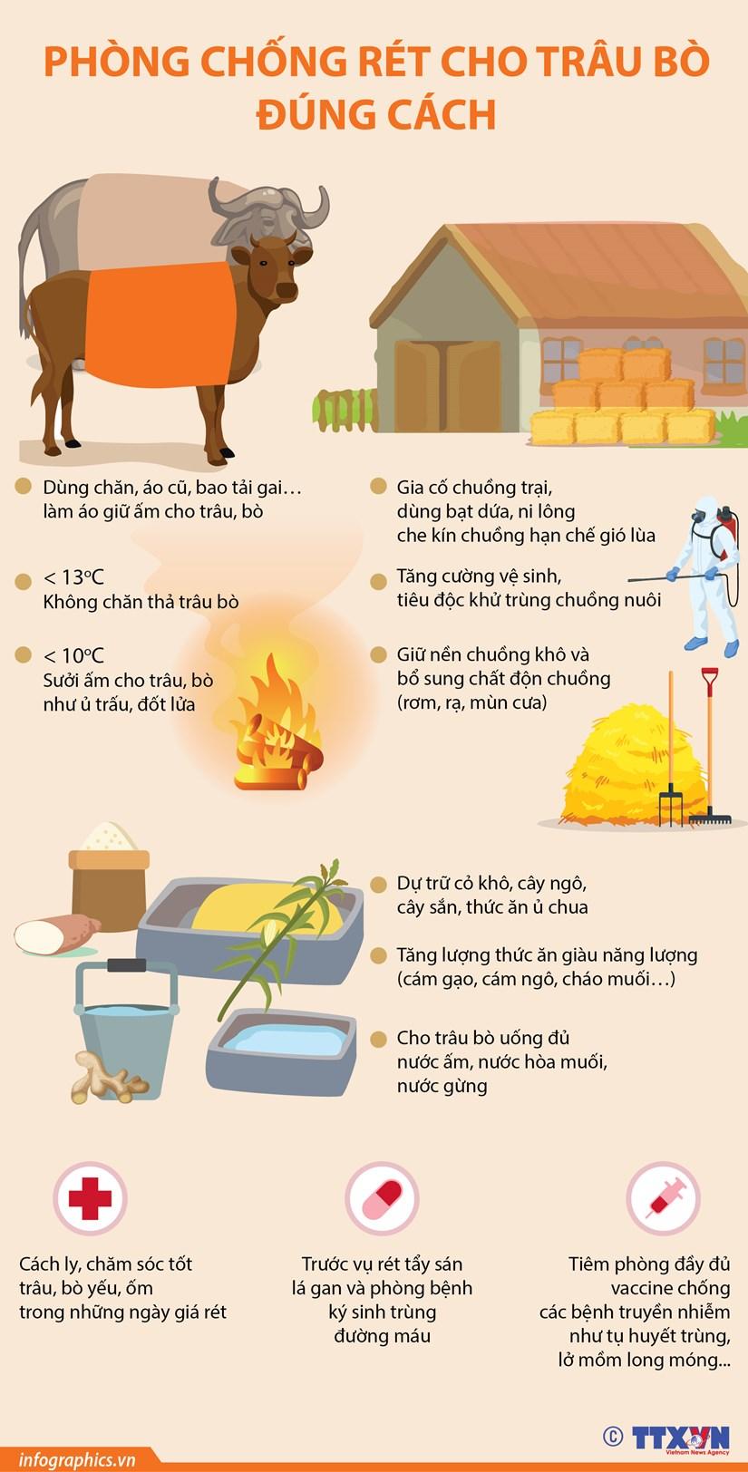[Infographics] Cach phong chong ret cho trau bo dung cach hinh anh 1