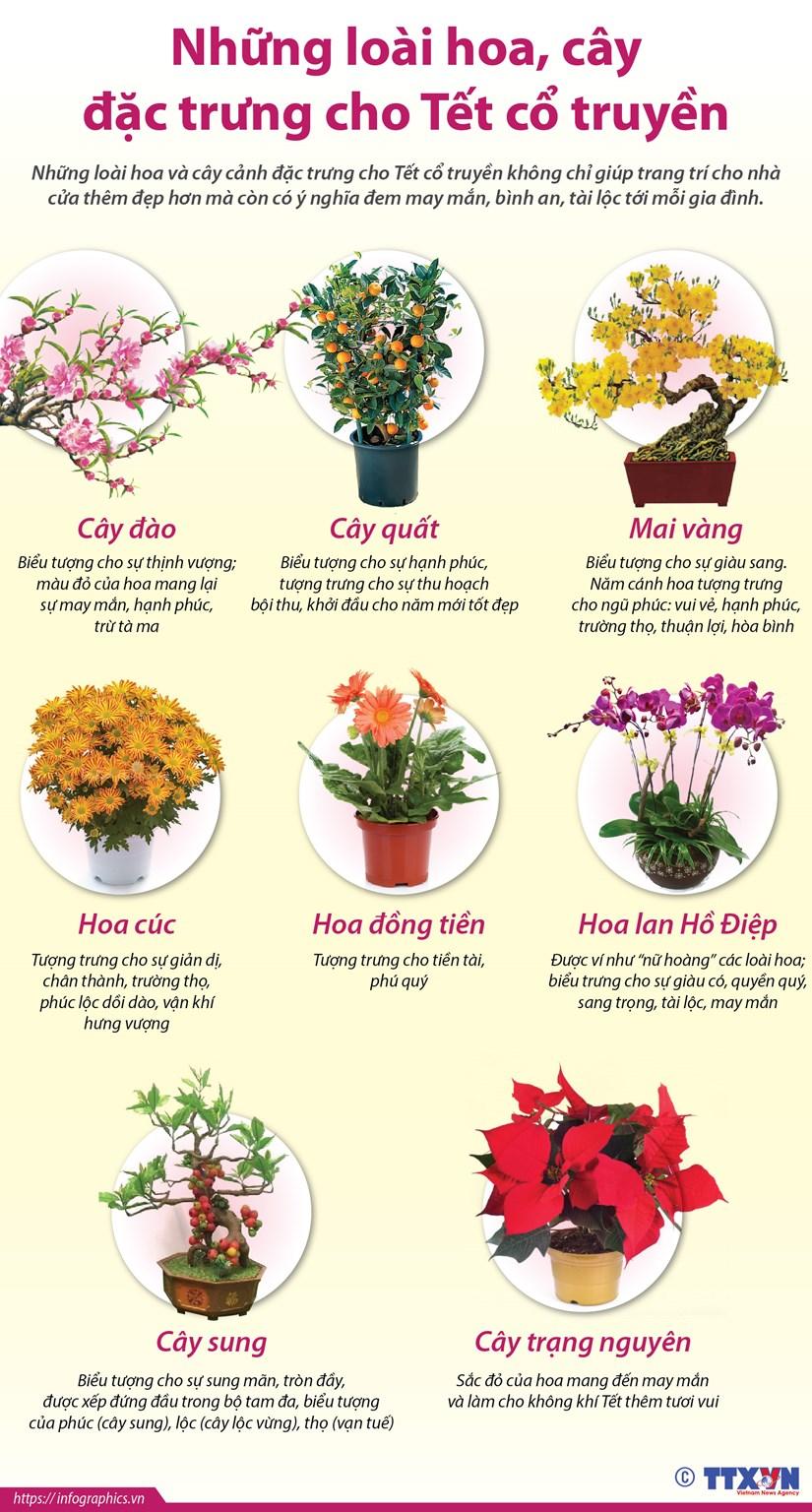 [Infographics] Nhung loai hoa, cay dac trung cho Tet co truyen hinh anh 1
