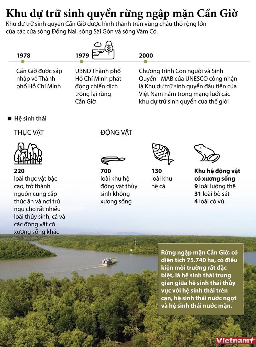 [Infographics] Khu du tru sinh quyen rung ngap man Can Gio hinh anh 1