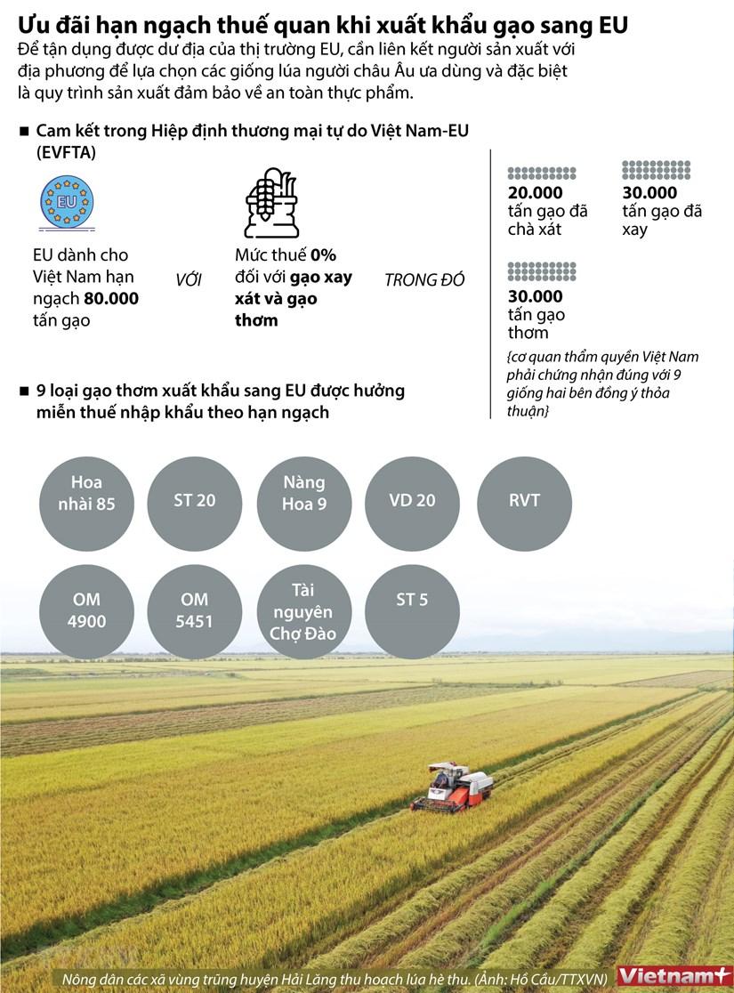 [Infographics] Uu dai han ngach thue quan khi xuat khau gao sang EU hinh anh 1