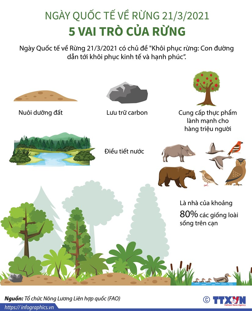 [Infographics] Ngay Quoc te ve Rung: 5 vai tro cua rung hinh anh 1