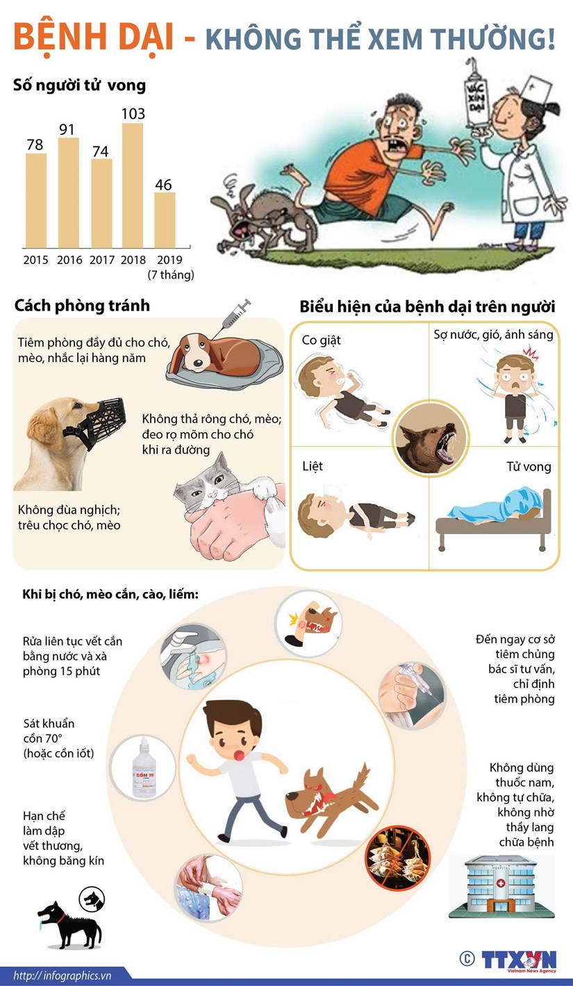[Infographics] Canh bao ve so ca tu vong do benh dai gay nen hinh anh 1