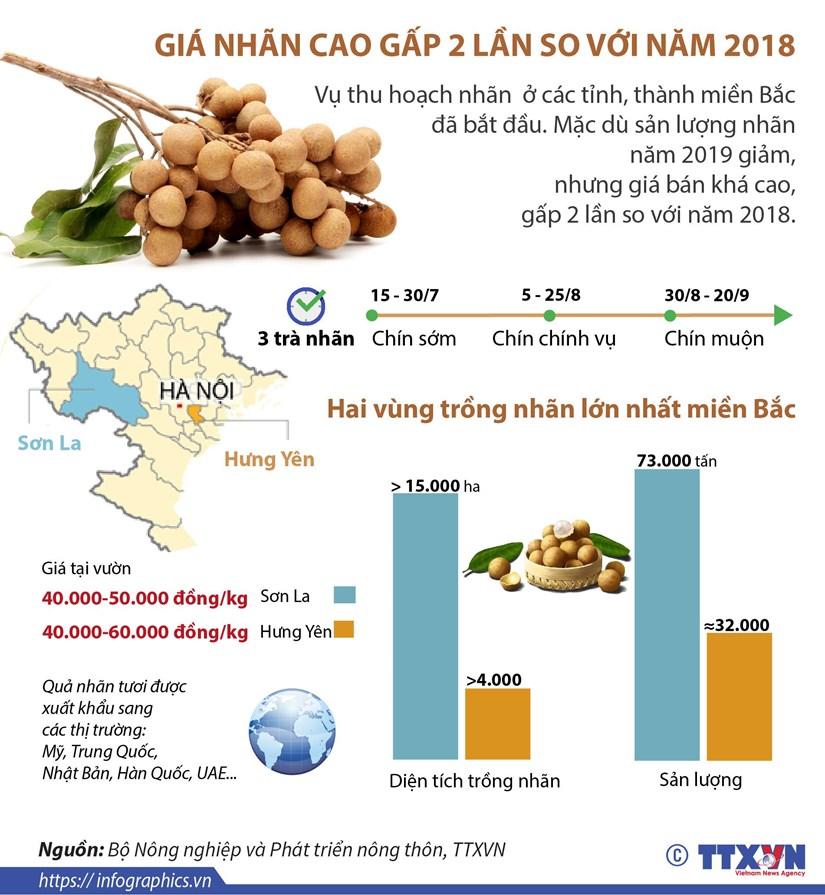[Infographics] Gia nhan cao gap 2 lan so voi nam 2018 hinh anh 1