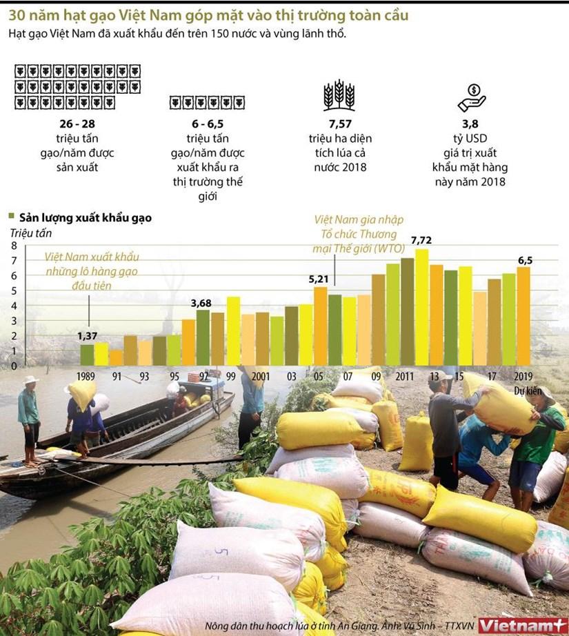 [Infographics] 30 nam hat gao Viet Nam gop mat vao thi truong toan cau hinh anh 1