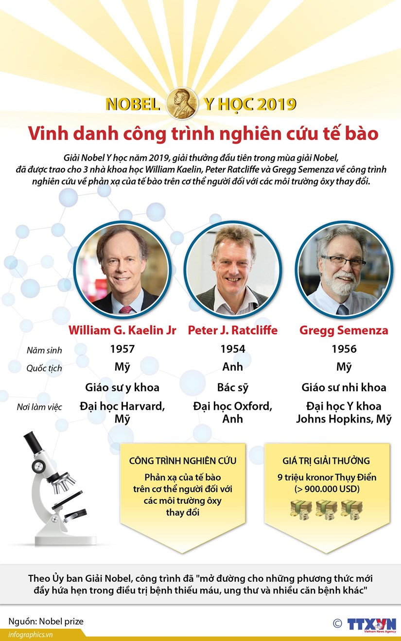 [Infographics] Nobel Y hoc 2019 vinh danh cong trinh nghien cuu te bao hinh anh 1