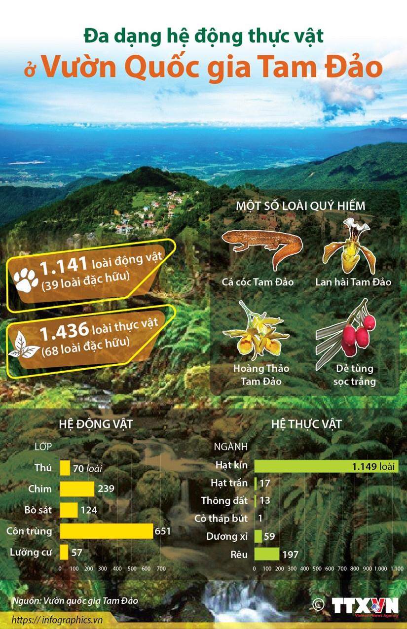 [Infographics] Da dang he dong thuc vat o Vuon Quoc gia Tam Dao hinh anh 1