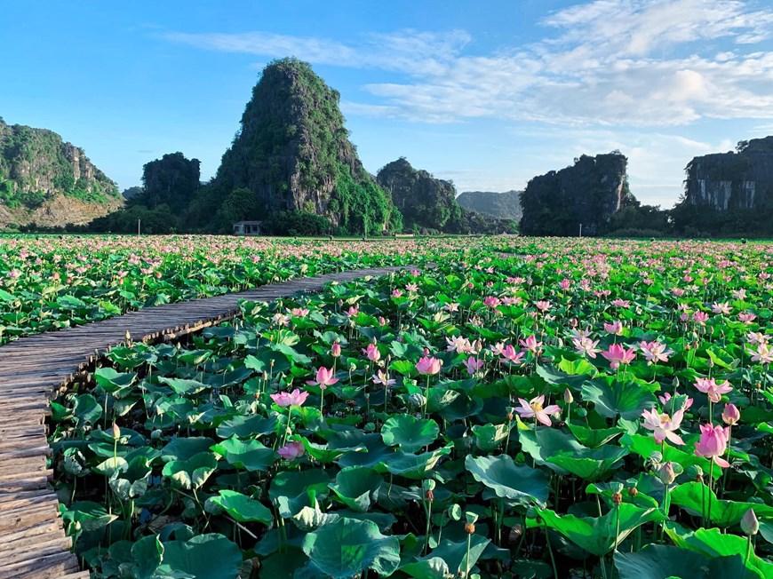 Photo] Kỳ lạ đầm sen nở rộ sắc màu giữa mùa Thu miền Bắc | Điểm đến |  Vietnam+ (VietnamPlus)