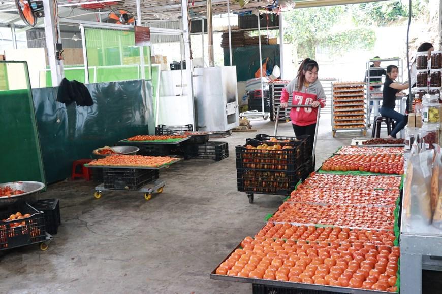 Lâm Đồng: Hồi sinh nghề sấy hồng với công nghệ Nhật Bản - 3
