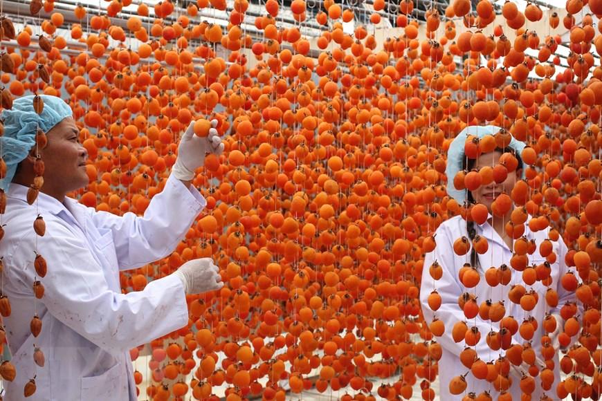 Lâm Đồng: Hồi sinh nghề sấy hồng với công nghệ Nhật Bản - 5
