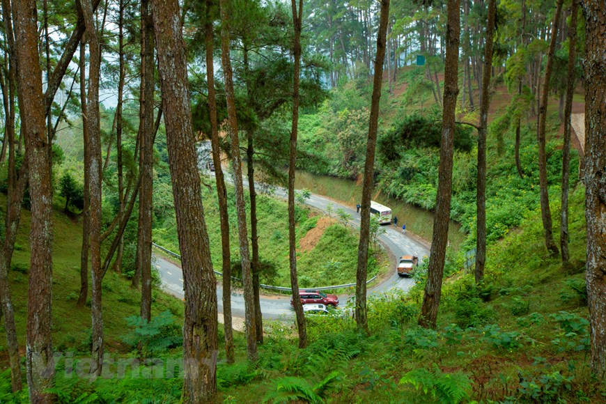 Lạc bước ở rừng thông Yên Minh - Thảo nguyên xanh giữa cao nguyên đá | Điểm  đến | Vietnam+ (VietnamPlus)