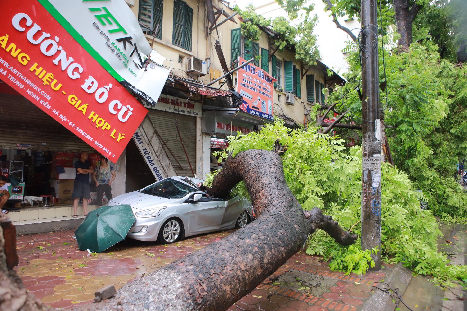 ô tô bà rịa - cây đổ đè xe khi trời mưa