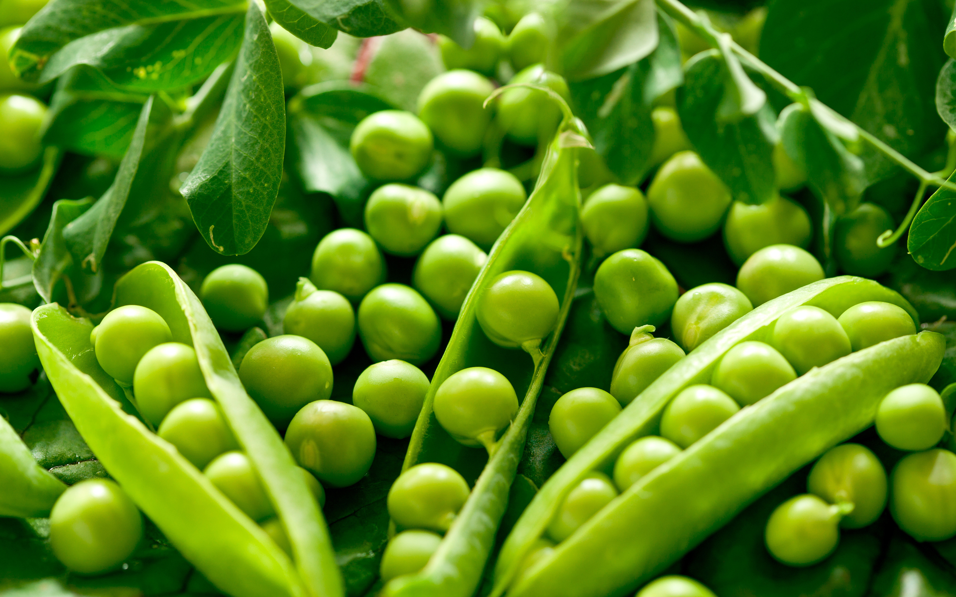 Image result for đậu hà lan