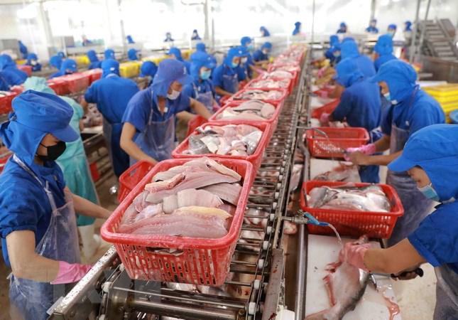 Xuất khẩu thủy sản nửa đầu năm 2021 vượt mốc 4,1 tỷ USD | Kinh doanh |  Vietnam+ (VietnamPlus)